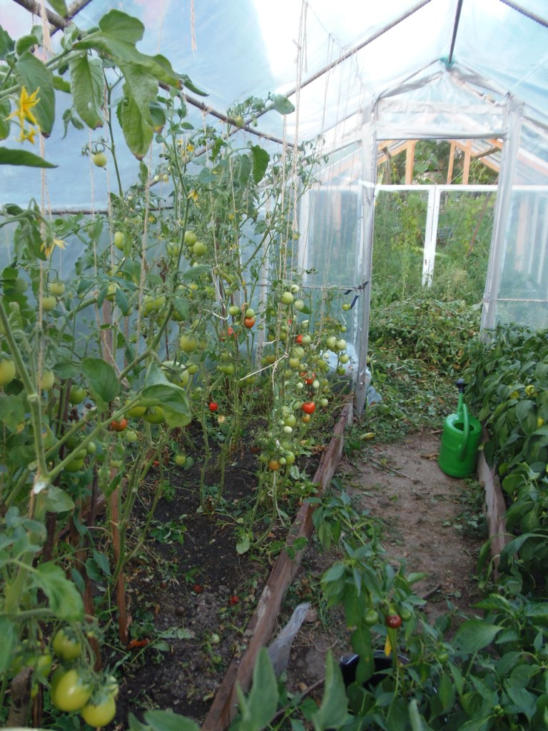 foliovnik - paradajky.JPG -